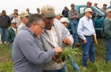 Wheat producers get to the root of crop prospects for 2007