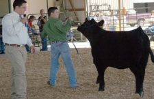 Marion County Fairground hosts annual Spring Beef Show