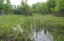 Former Spring Lake may be restored as wetlands project