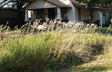 City aims to educate property owners about 'nuisance' weeds