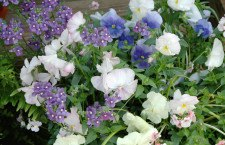 End-of-summer gardening tips will pay off next spring