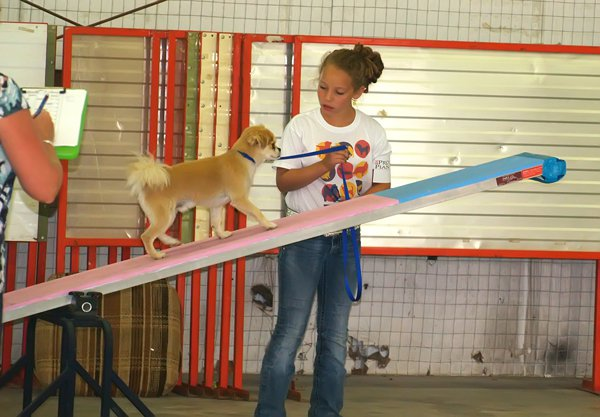 Handlers increase for county 4-H dog show