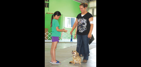 An assistant to the judge takes the leash from Morgan Gaines of Peabody during the obedience portion of the 4-H Dog Show Saturday morning at the fairgrounds in Hillsboro. The show was the first 4-H event prior to the official start of the Marion County Fair today. A second 4-H event, the annual horse show, followed Sunday evening in the rodeo arena. In addition to the 4-H competitions, organizers have planned nightly entertainment for people of all ages. Patty Decker / Free Press