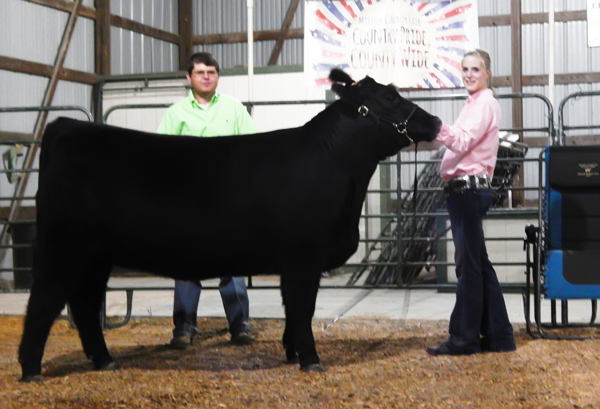The supreme champion breeding heifer (above) at this year's Marion County Fair.