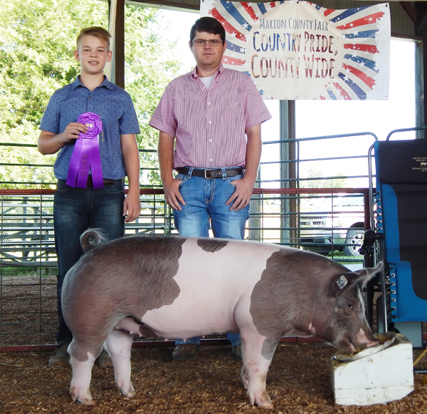 >SWINE: Tayle Black (top photo) of the Peabody Achievers was awarded the ribbon for grand champion market hog. Landon Roberts (lower photo) of the South Cottonwood club showed the grand champion breeding gilt. Right photo: Corin Parmley (left) and Lane Smith were named champion showman and reserve champion showman, respectively.