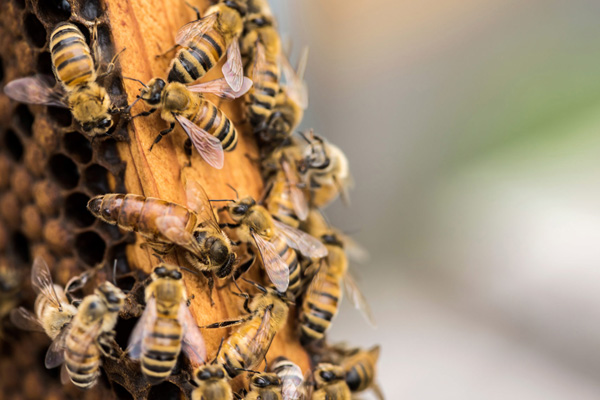 Buzz growing for 'Beesponsible' awareness