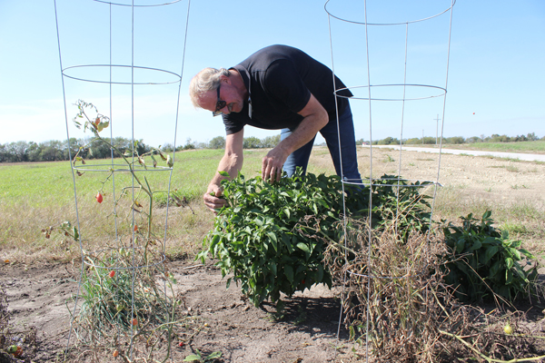 Hospital garden provides homegrown health