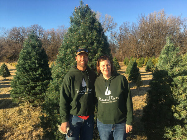 Pine tree business offers experience off beaten path